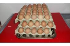 Friss tojás